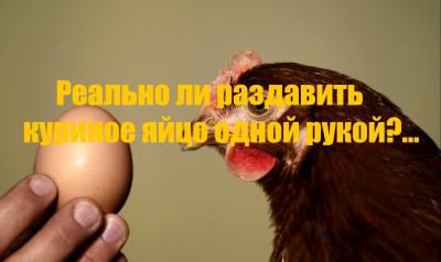 Возможно ли раздавить яйцо одной рукой?
